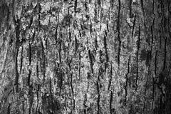 在黑白的树皮纹理 免版税库存图片