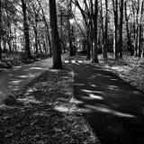 在黑白的森林艺术性的神色 免版税库存照片