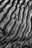 在黑白的沙子波纹 免版税库存图片