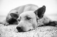 在黑白的狗 免版税库存照片