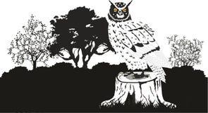 在黑白的猫头鹰 免版税库存照片