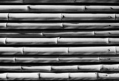 在黑白的竹纹理 库存图片