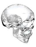 在黑白的肮脏的看的头骨 免版税库存图片