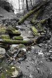 在黑白的自然与绿色青苔 免版税库存图片