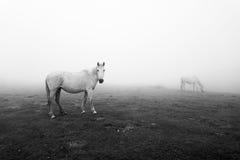 在黑白的马 免版税图库摄影
