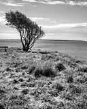 在黑白的结构树 库存照片