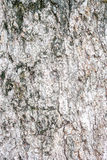 在黑白美丽的老木五谷样式自然地 库存图片