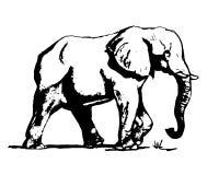 在黑白01的大象 免版税库存照片