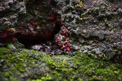 在洞的一只红色蚂蚁 库存图片