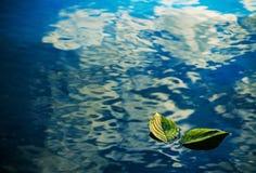 在水的两片绿色叶子 库存照片
