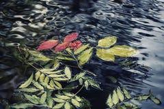在水的五颜六色的叶子 库存照片