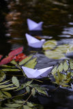 在水的五颜六色的叶子 库存图片