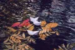 在水的五颜六色的叶子 免版税库存照片