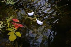 在水的五颜六色的叶子 免版税库存图片