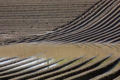 在水洪水的农业棕色泥土壤领域 免版税库存图片