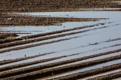 在水洪水的农业棕色泥土壤领域 库存图片