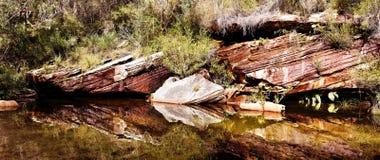 在水的反射在皇家国家公园, NSW,澳大利亚 免版税库存照片