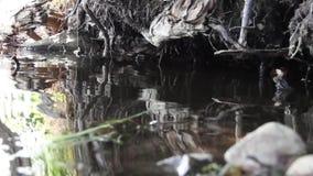 在水的反映 影视素材