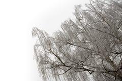 在轻的天空的结霜的桦树在冬天 库存图片