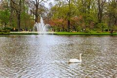 在水的天鹅在有一个喷泉的一个公园在背景中 免版税库存图片