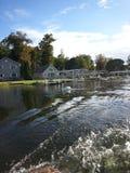 在水的天鹅 免版税图库摄影