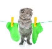 在绳索的小猫垂悬的袜子烘干的 查出在白色 图库摄影