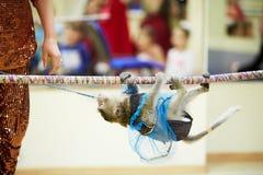 在绳索的小的猴子攀登 库存图片