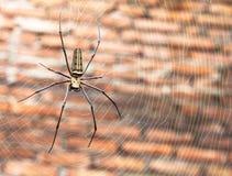 在他的巢的大蜘蛛 免版税库存图片