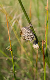 在他们的巢的纸质黄蜂 免版税库存照片