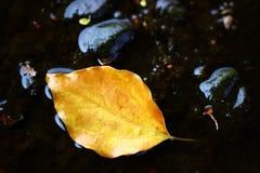 在水的干燥叶子 免版税库存图片