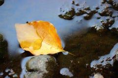 在水的干燥叶子 库存图片
