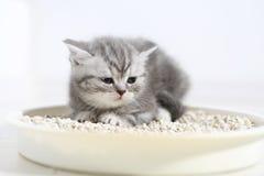 在他的废弃物的逗人喜爱的小猫 库存照片