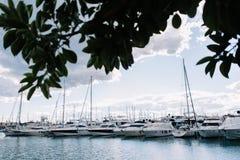 在水的很多白色游艇 在海洋水的小船 一条白色游艇 树的分支 美好的日落 A 库存照片