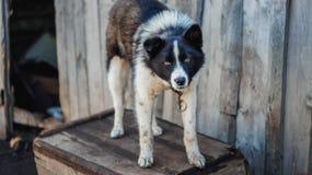 在他的房子附近的可怜的狗 免版税图库摄影