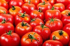 在水滴的新鲜的红色蕃茄。 免版税库存照片