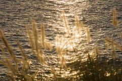 在水的日落太阳火花通过海滨草 库存图片