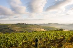 在他的最好的tuscani 免版税图库摄影