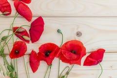 在轻的木背景的开花的野生鸦片 墙纸, 库存图片