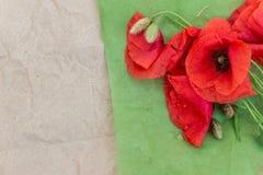 在轻的木背景的开花的野生鸦片 墙纸, 免版税库存图片