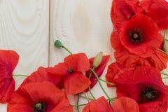 在轻的木背景的开花的野生鸦片 墙纸, 库存照片