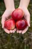 在轻的木背景的草莓 图库摄影