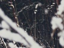 在死的木头的雪 库存照片