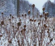 在死的木头的雪 免版税图库摄影