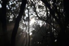 在& x28的枝杈; Tropical& x29;森林 免版税图库摄影