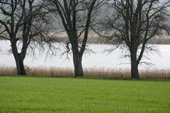 在水的树剪影 免版税库存照片