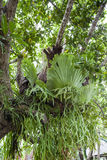 在死的树的蕨在国家公园的庭院里 免版税库存图片