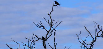 在死的树的鸟 免版税库存图片