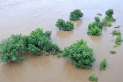 在洪水的树 库存照片