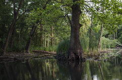 在水的树 免版税库存图片
