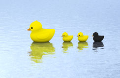 在水的橡胶鸭子家庭游泳 免版税图库摄影